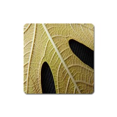 Yellow Leaf Fig Tree Texture Square Magnet