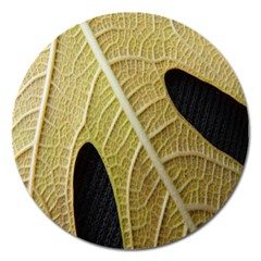 Yellow Leaf Fig Tree Texture Magnet 5  (round)