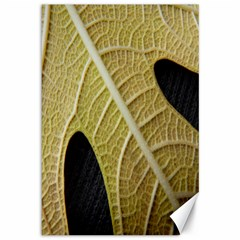 Yellow Leaf Fig Tree Texture Canvas 12  x 18