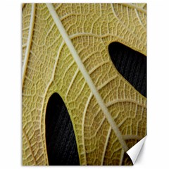 Yellow Leaf Fig Tree Texture Canvas 18  x 24