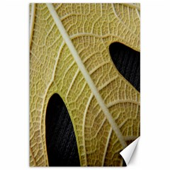 Yellow Leaf Fig Tree Texture Canvas 20  x 30