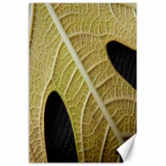Yellow Leaf Fig Tree Texture Canvas 24  x 36