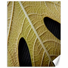 Yellow Leaf Fig Tree Texture Canvas 11  x 14