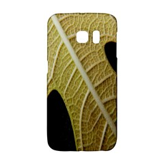Yellow Leaf Fig Tree Texture Galaxy S6 Edge