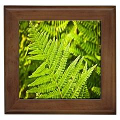 Fern Nature Green Plant Framed Tiles