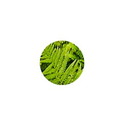 Fern Nature Green Plant 1  Mini Buttons
