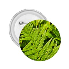 Fern Nature Green Plant 2.25  Buttons
