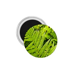 Fern Nature Green Plant 1 75  Magnets