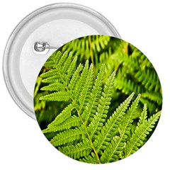 Fern Nature Green Plant 3  Buttons