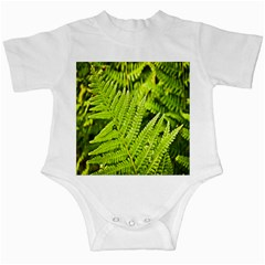 Fern Nature Green Plant Infant Creepers