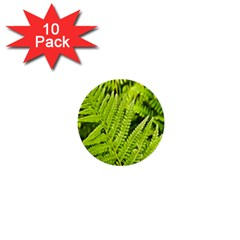 Fern Nature Green Plant 1  Mini Buttons (10 pack)