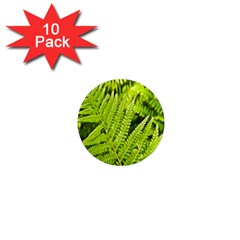 Fern Nature Green Plant 1  Mini Magnet (10 pack)