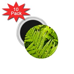 Fern Nature Green Plant 1.75  Magnets (10 pack)
