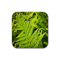 Fern Nature Green Plant Rubber Square Coaster (4 Pack)