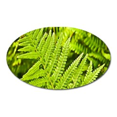 Fern Nature Green Plant Oval Magnet