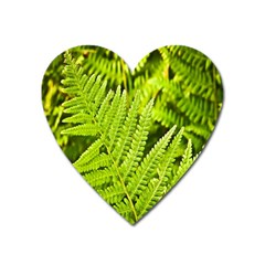 Fern Nature Green Plant Heart Magnet