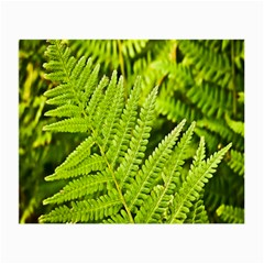 Fern Nature Green Plant Small Glasses Cloth