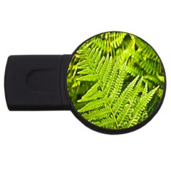 Fern Nature Green Plant USB Flash Drive Round (4 GB)