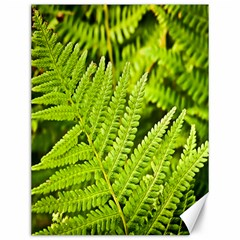 Fern Nature Green Plant Canvas 12  x 16