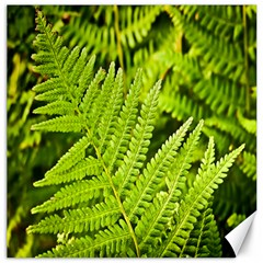 Fern Nature Green Plant Canvas 16  X 16