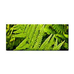 Fern Nature Green Plant Cosmetic Storage Cases