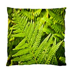Fern Nature Green Plant Standard Cushion Case (Two Sides)