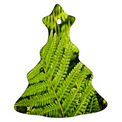 Fern Nature Green Plant Christmas Tree Ornament (Two Sides)