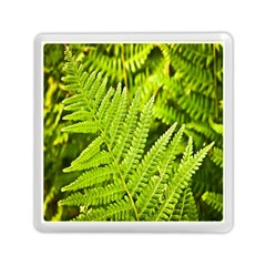 Fern Nature Green Plant Memory Card Reader (Square)