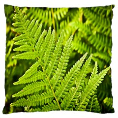 Fern Nature Green Plant Large Cushion Case (one Side)