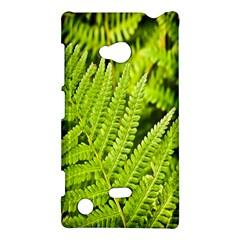 Fern Nature Green Plant Nokia Lumia 720