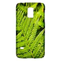 Fern Nature Green Plant Galaxy S5 Mini