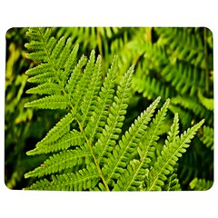 Fern Nature Green Plant Jigsaw Puzzle Photo Stand (Rectangular)