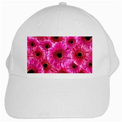 Gerbera Flower Nature Pink Blosso White Cap