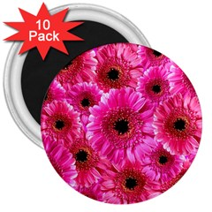 Gerbera Flower Nature Pink Blosso 3  Magnets (10 pack)