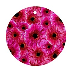 Gerbera Flower Nature Pink Blosso Round Ornament (Two Sides)