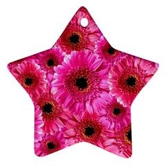 Gerbera Flower Nature Pink Blosso Star Ornament (Two Sides)