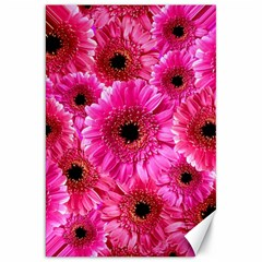 Gerbera Flower Nature Pink Blosso Canvas 20  x 30