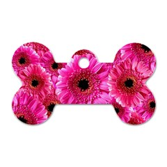 Gerbera Flower Nature Pink Blosso Dog Tag Bone (Two Sides)