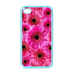 Gerbera Flower Nature Pink Blosso Apple iPhone 4 Case (Color)