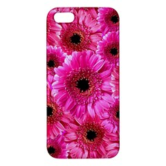 Gerbera Flower Nature Pink Blosso Iphone 5s/ Se Premium Hardshell Case