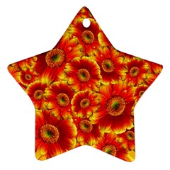 Gerbera Flowers Blossom Bloom Star Ornament (Two Sides)