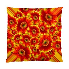 Gerbera Flowers Blossom Bloom Standard Cushion Case (One Side)