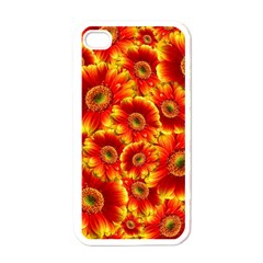 Gerbera Flowers Blossom Bloom Apple iPhone 4 Case (White)