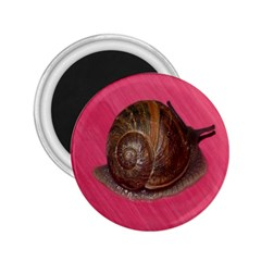 Snail Pink Background 2.25  Magnets