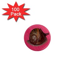 Snail Pink Background 1  Mini Magnets (100 pack)
