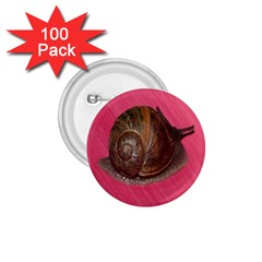 Snail Pink Background 1.75  Buttons (100 pack)