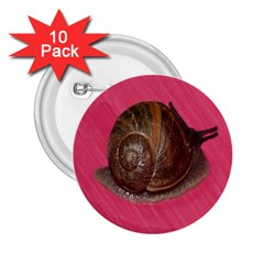 Snail Pink Background 2 25  Buttons (10 Pack)