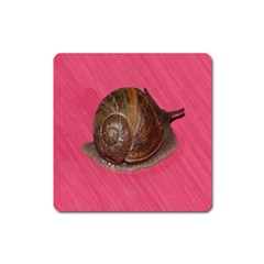 Snail Pink Background Square Magnet