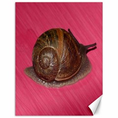 Snail Pink Background Canvas 12  x 16