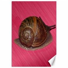 Snail Pink Background Canvas 12  X 18
